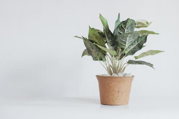 Pianta in un vaso isolato su sfondo bianco con copia spazio