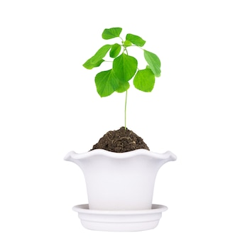 Vaso per piante isolato su sfondo bianco.