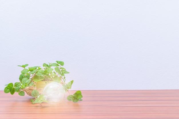 Vasi per piante e bulbi si trovano sulla scrivania