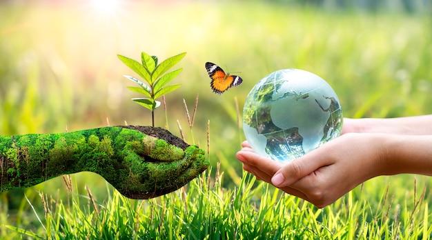 Le mani della pianta che tengono una pianta e le mani del bambino che tengono il globo terrestre, una farfalla sullo sfondo dell'erba