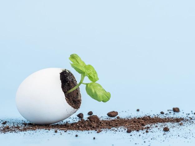 Germoglio della pianta in guscio d'uovo su sfondo blu. prodotto biologico ecologico, coltivazione di piante.