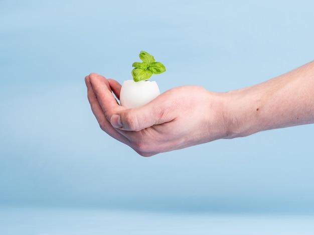 Germoglio della pianta in guscio d'uovo su sfondo blu in mano d'uomo. prodotto biologico ecologico, coltivazione di piante.