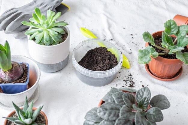 Trapianto di piante, terra, vasi, strumenti per il reimpianto sul tavolo. varie piante in diversi vasi sul tavolo. concetto di casa giardino interno.