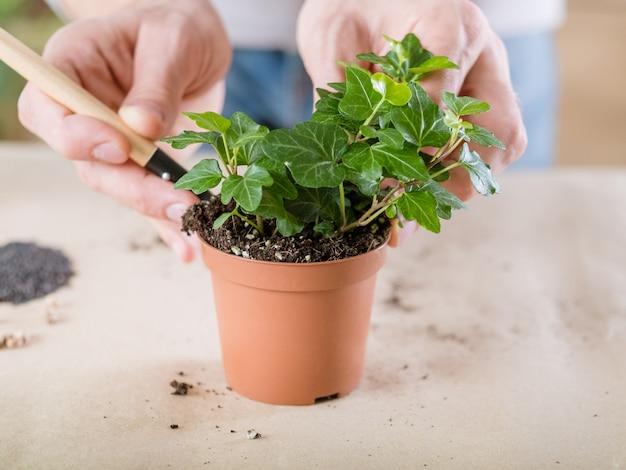 Trapianto di piante. concetto di cura della flora domestica. mani che ripiantano la pianta d'appartamento.