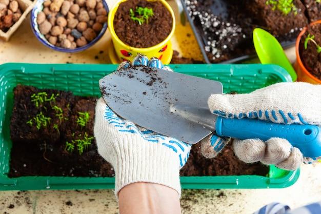 Chiuda il processo di trapianto di piante. accessori da giardinaggio