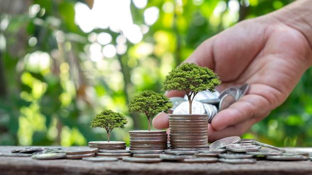 Pianta alberi su monete o denaro secondo il concetto di crescita del denaro