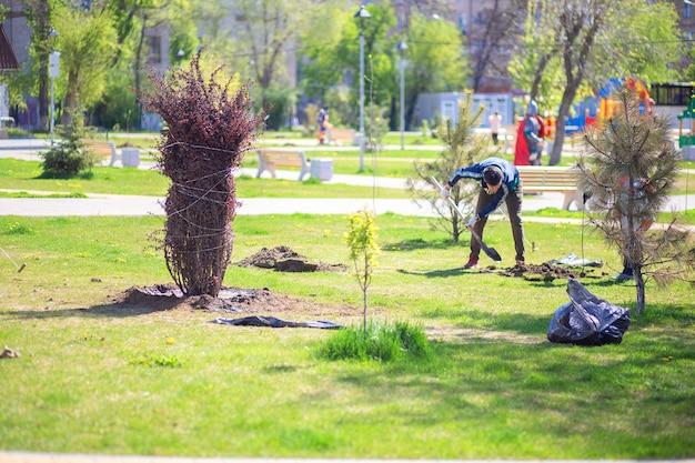 Piantare cespugli e alberi nel parco cittadino. nel parco è stato piantato un grande cespuglio di crespino.