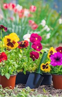 Piantare un giardino fiorito, primavera estate. messa a fuoco selettiva.