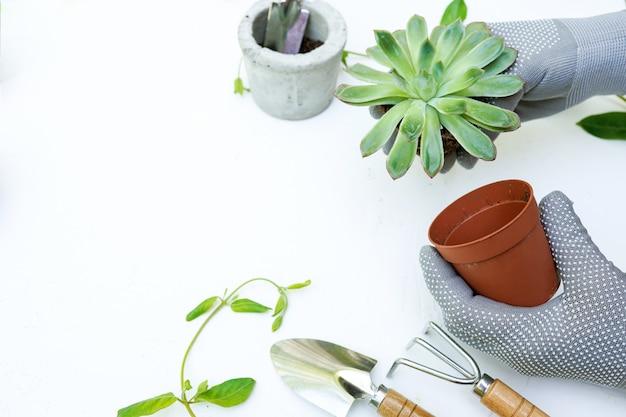 Piantare succulente della pianta verde in serra in primavera Foto Premium