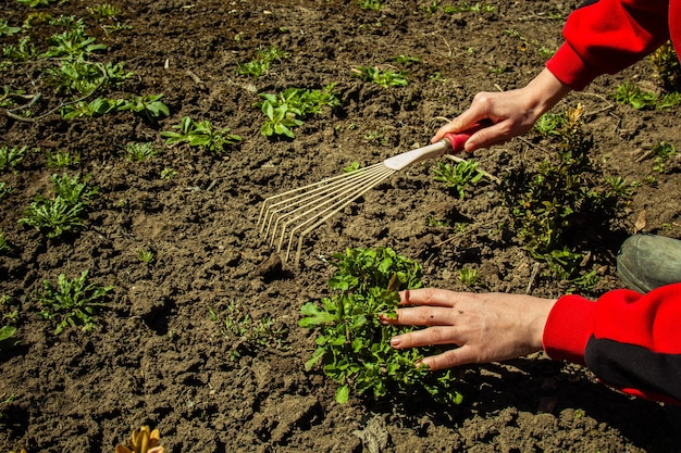 Piantare piante in piena terra in primavera con una pala