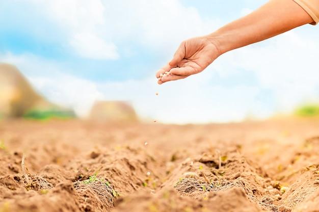 Piantare semi, coltivare verdure dal seme.