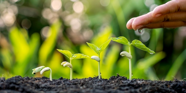 Piantare o trapiantare piantine include la manutenzione manuale delle piante annaffiando le piantine in crescita in ordine di germinazione su terreno fertile