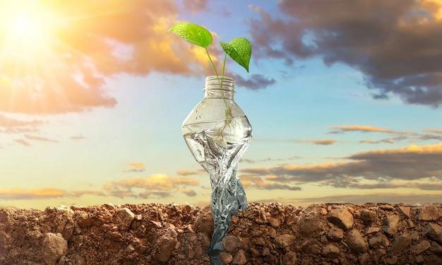 Piantare alberi in bottiglie su naturale. conservazione della foresta
