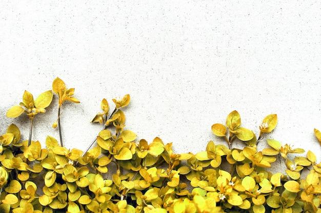 Piante sullo sfondo del muro. pianta rampicante gialla. sfondo