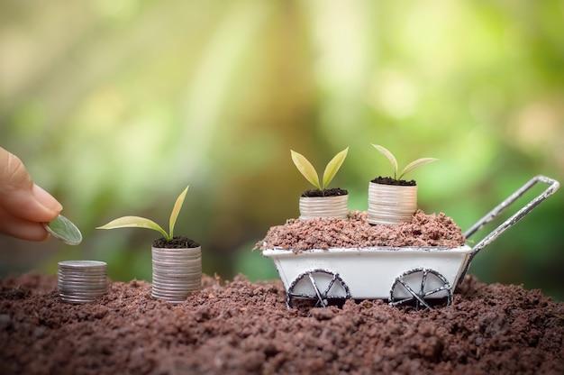 Piante che crescono di affari o concetto di investimento