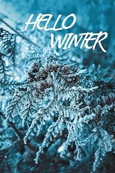 Piante in primo piano di brina su un mistico sfondo blu scuro l'inizio dell'inverno