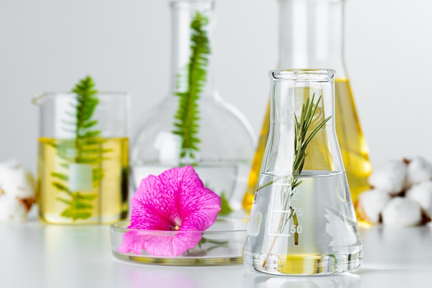 Piante in vetreria di laboratorio. concetto di ricerche chimiche di prodotti e farmaci per la cura della pelle
