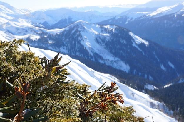 Piante in montagna sullo sfondo di alte vette