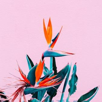 Piante sul concetto rosa. moda fiori tropicali su parete rosa