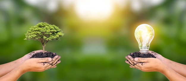 Piante piantate da mani umane e lampadine in mani umane per risparmiare energia