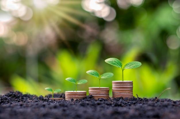 Piante piantate su una pila di monete