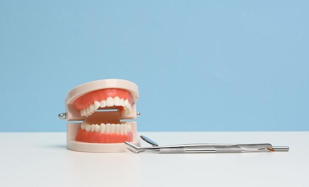 Modello in plastica di mascella umana con denti bianchi uniformi e uno specchio per esami medici su un tavolo bianco, igiene orale