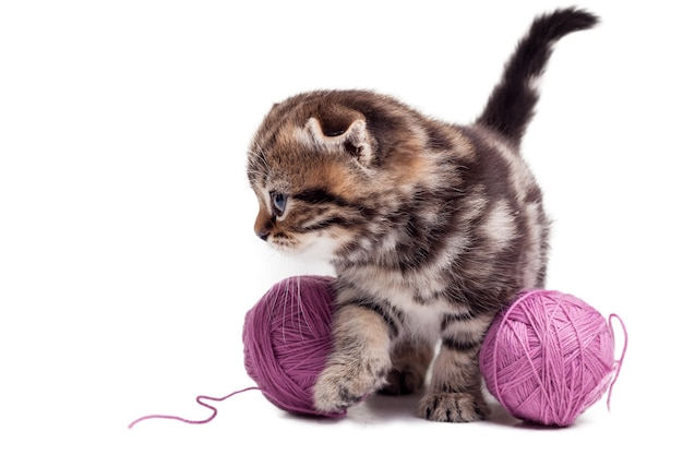 Gattino giocherellone e curioso. curioso gattino scottish fold in piedi vicino ai grovigli di lana e distoglie lo sguardo