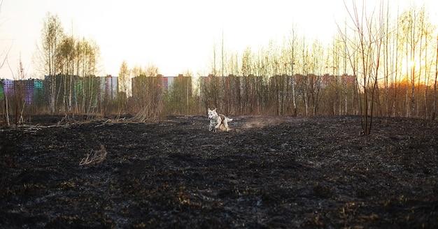 Cane giocoso che scorrazza sul campo con edifici e cielo sullo sfondo al soleggiato mattino primaverile
