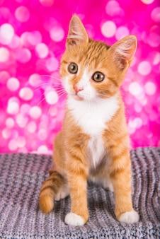 Gattino rosso carino giocoso e divertente su sfondo rosa