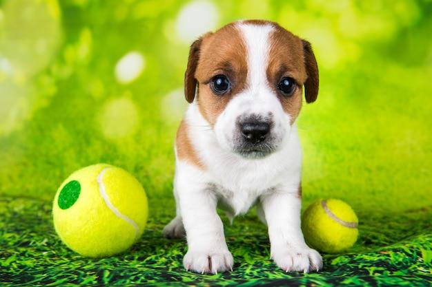 Giocoso cane jack russell terrier felice con pallina da tennis