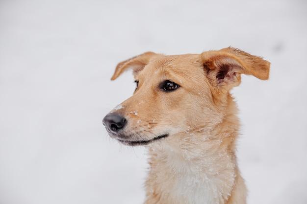 Cane marrone chiaro allegro che si siede sulla neve in una foresta