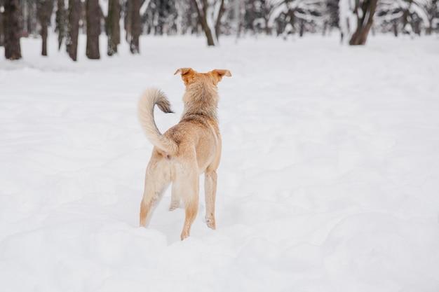 Cane marrone chiaro giocoso sulla neve in una foresta