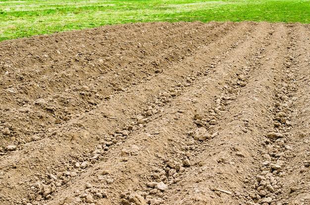 Campo arato in un ambiente rurale, erba primaverile e colture fresche.