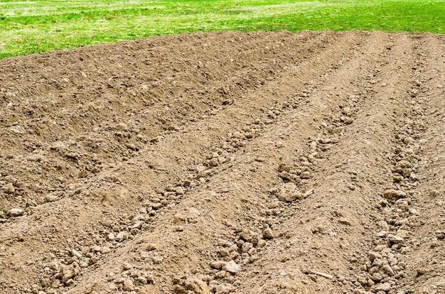 Campo di terreno arato in un paese rurale con erba primaverile e raccolti freschi