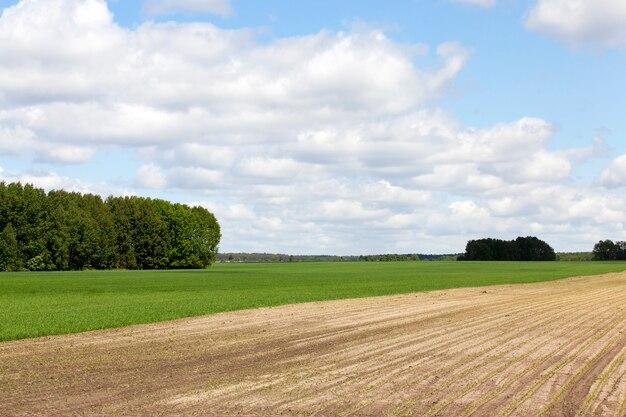Terreno arato, per crescere e produrre un nuovo raccolto