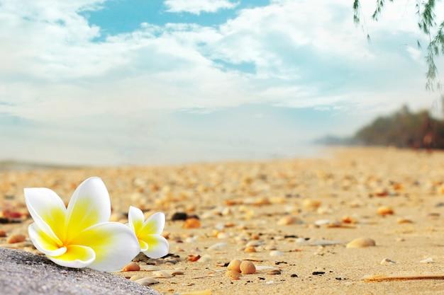 I fiori di plumeria sulla spiaggia sono pieni di conchiglie in estate.