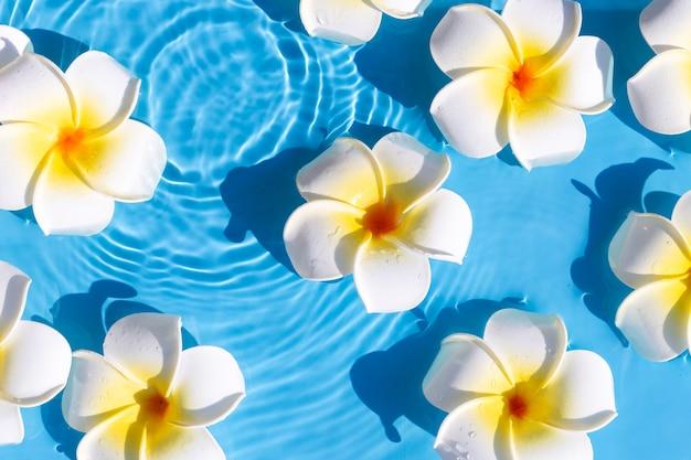 Fiori di plumeria su uno sfondo di acqua blu. vista dall'alto, piatto.