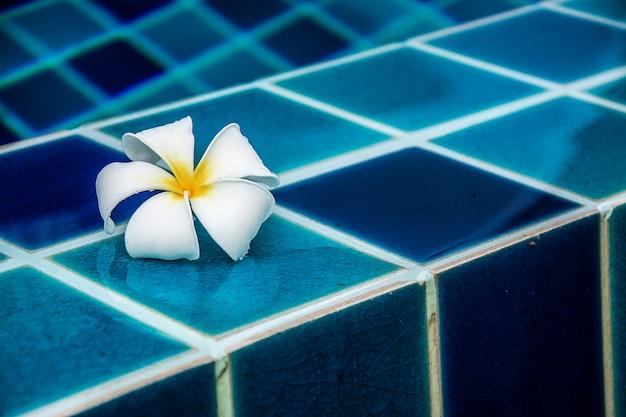 I fiori di plumeria delimitano la piscina