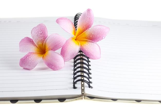 Plumeria su uno sfondo di libro bianco.