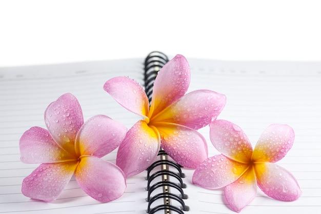 Plumeria su uno sfondo di libro bianco. Foto Premium