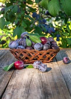 Prugne in un vaso su un tavolo di legno nel giardino estivo. frutta di stagione.