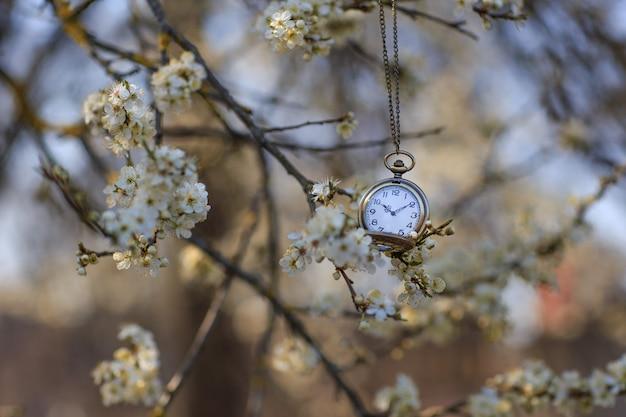 Orologio da tasca appeso a un ramo di ciliegio in fiore