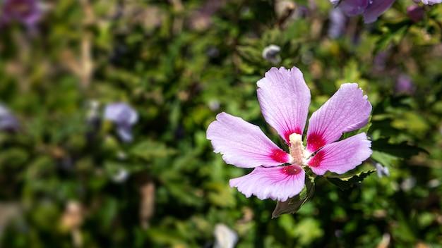 Fiore rosa riempito di polline su uno sfondo di pianta verde