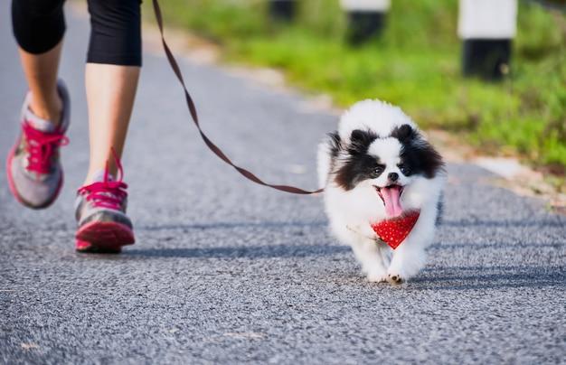 Esercizio corrente del cane pomeranian sul parco della via di mattina