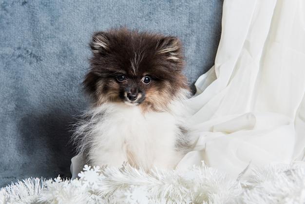 Cucciolo di cane spitz di pomerania in ghirlande, cartolina di natale o sfondo per il nuovo anno