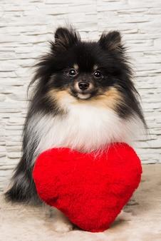 Cucciolo di cane spitz di pomerania con cuore rosso, biglietto di auguri