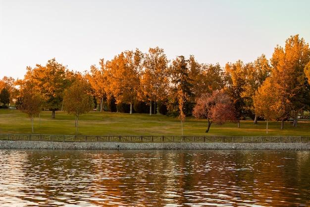 Stagno con alberi colorati autunnali in un parco.