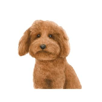 Illustrazione dell'acquerello del cucciolo di cane del barboncino