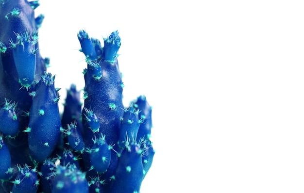 Primo piano in stile pop art di mini cactus blu vivido con spine turchesi isolate su sfondo bianco