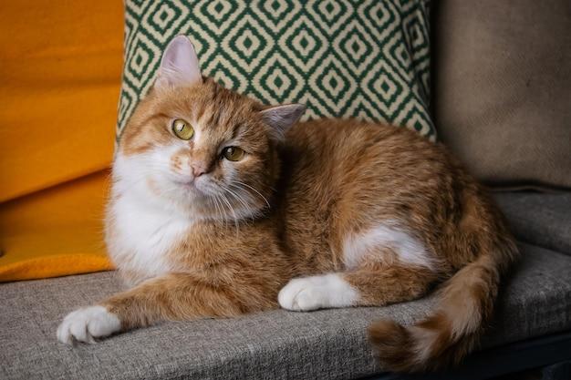Un facchino di un gatto a pelo lungo bianco con gli occhi gialli